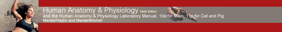 Marieb/Hoehn, Human Anatomy & Physiology, 9e - Open Access
